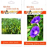 Alkarty Green Chili And Morning Glory Seeds Pack Of 20