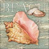Beach Shells Conch by Paton, Julie - Fine Art Print on PAPER : 24 x 24 Inches