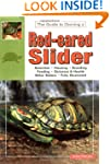 Red Eared Slider Turtles Real