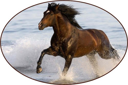 Brown Horse Running Through Water - Etched Vinyl Stained ... - photo#11