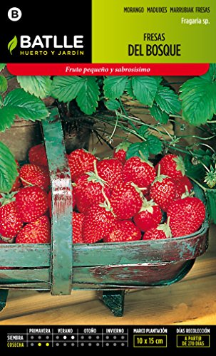 semillas-batlle-097335bols-fresas-del-bosque