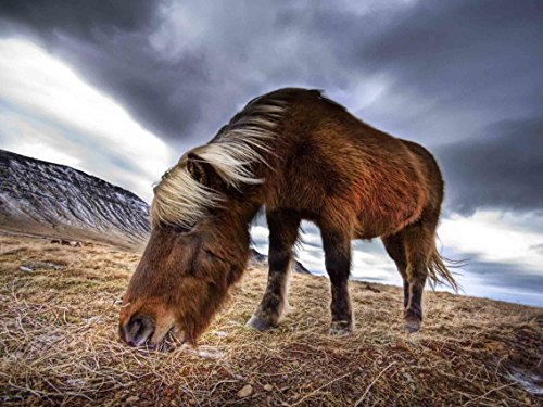 Sanbay Art Modern Giclee Canvas Prints Stretched Artwork Abstract Animal Horse to Photo Paintings Wood Framed Inside Wall Art for Home Office Decorations Wall Decor 1pcs/set