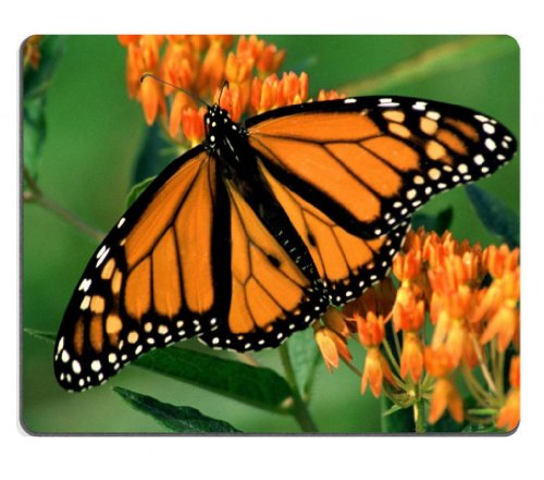 Butterfly Monarch Flower Orange Black Pattern Animal Insect Mouse Pads Customized Made To Order Support Ready 9 7/8 Inch (250Mm) X 7 7/8 Inch (200Mm) X 1/16 Inch (2Mm) High Quality Eco Friendly Cloth With Neoprene Rubber Lux Mouse Pad Desktop Mousepad Lap front-1061940