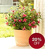 Small Patio Pot - Fuchsia