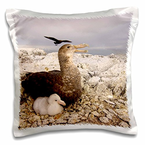 Danita Delimont - Wildlife - Southern giant petrel, chick, Antarctic Peninsula-AN02 SKA0587 - Steve Kazlowski - 16x16 inch Pillow Case (pc_76241_1)