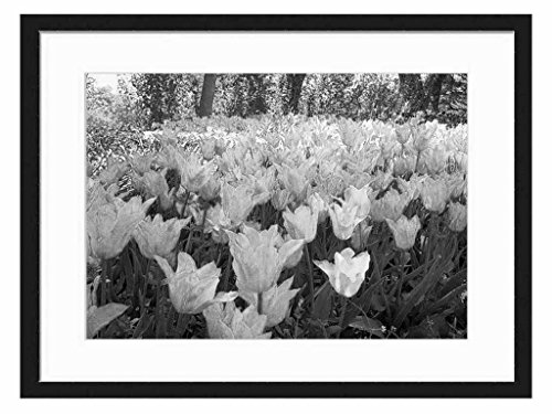 Morning sun - Art Print Wall Solid Wood Framed Picture (Black & White 20x14 inches)