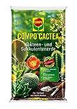 Compo 1123102004 Cactea Kakteen und Sukkulentenerde