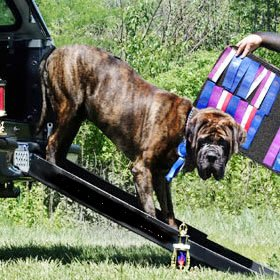 Dog Ramp For Truck >> Dog Ramps For Beds Truck Dog Ramp Black Triple Telescoping 84