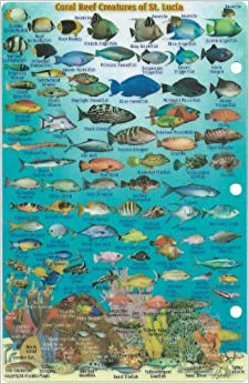 St. Lucia Dive Map & Reef Creatures Guide Franko Maps Laminated Fish