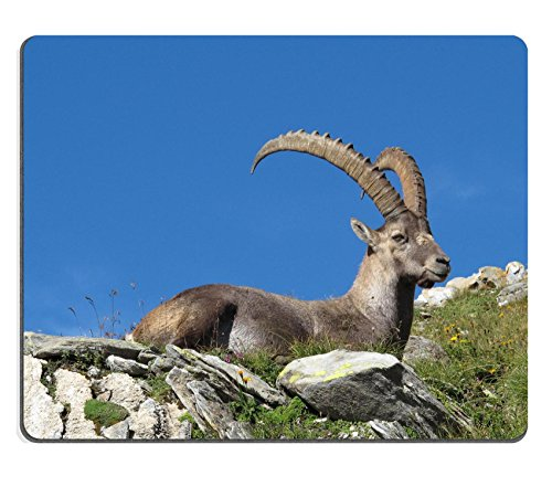Liili Mouse Pad Natural Rubber Mousepad Beautiful lying alpine ibex Image ID 21949693