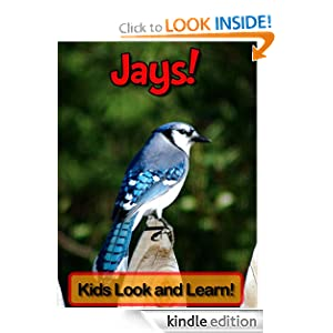 Jays! Learn About Jays and Enjoy Colorful Pictures - Look and Learn! (50+ Photos of Jays)