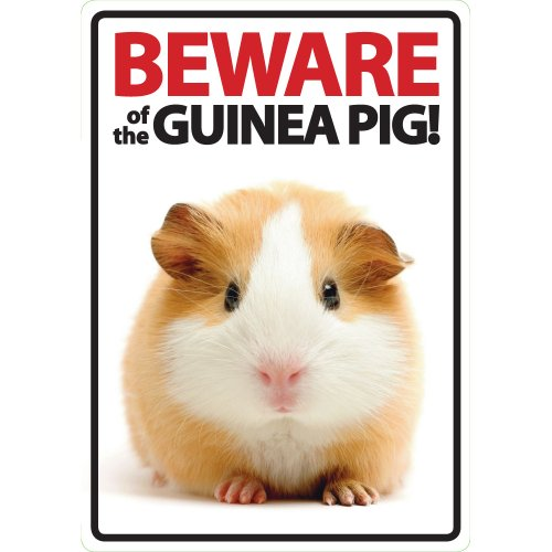 Beware of The Guinea Pig Plastic Sign