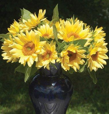 david sunflower seeds clipart - photo #43