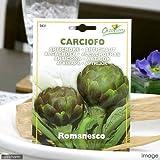 HORTUS イタリア野菜の種 アーティチョーク(カルチョーフィ)・ロマネスコ Art.421 家庭菜園