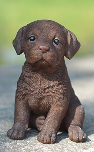 Pet Pals - Labrador - Chocolate Puppy Statue (Chocolate Statue compare prices)