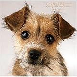 ジョンの純な恋物語[特別完全版]~6 Songs for DOG LOVERS~