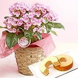 敬老の日ギフト 花鉢 花とスイーツセット(鉢植えの花ギフト) におい桜の鉢植え
