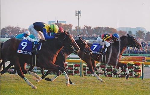 2013年 第33回ジャパンカップ G1 ジェントルドンナ 写真