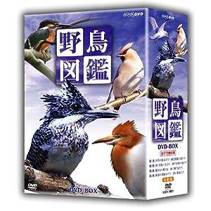 野鳥図鑑 DVD-BOX