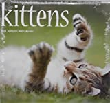 2013 Kittens 16 Month Wall Calendar 12 x 11
