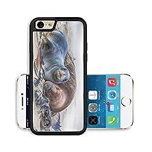 buy Liili Premium Apple Iphone 6 Iphone 6S Aluminum Snap Case Wildlife Photo Of A New Zealand Sea Lions Image Id 14983721