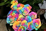 1 Dozen Real Rainbow Roses from Holland