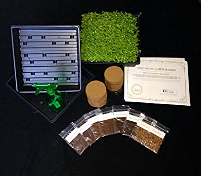 NEW Urban Microgreen Grow Kit - Indoor Superfoods Year-round - 3 Month Supply - Non-GMO Microgreen Seeds, Coco Coir Soil Wafers, Smoothie Recipes, Grow Trays & Growing Supplies