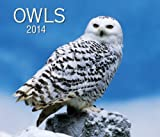 img - for Owls 2014 book / textbook / text book