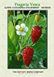Alpine Alexandria Strawberry (100) Seeds - Fragaria Vesca