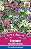 Alyssum Magic Circle Mixed