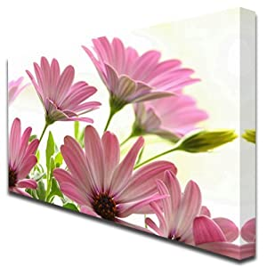 Pink Daisy Daisies floral flowers box print canvas art picture Large 600 from Box Prints