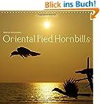 Oriental Pied Hornbills (Wall Calenda...