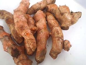 Fresh Yellow Turmeric Root - 1lb