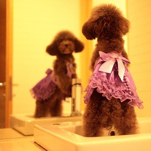 【全5サイズ】ドッグウェア 犬用ワンピース 犬のプリンセスドレス リボン洋服 パープル (XLサイズ(首回り33cm * 着丈32cm * 胴回し50cm)8137-5)