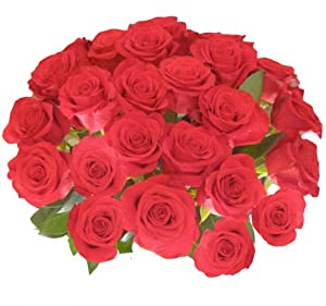 Flower Delivery - 25 Giant, Incredibly Fragrant Long Stem Red Roses From Spring in the Air Luxury Roses