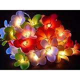 Mixed Colours Frangipani Flower Fairy Lights