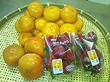 九州産 新鮮果物 3品目詰合せセット