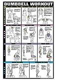 "Dumbbell Workout Ii 24"" X 36"" Laminated Chart (Shoulder, Back, Leg, & Calf)"