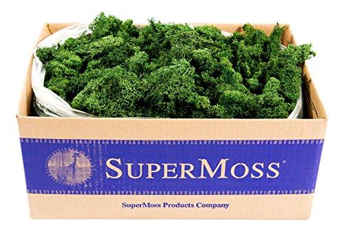 SuperMoss (21710) Reindeer Moss Preserved, Forest Green, 3lbs