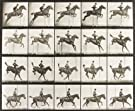 A horse jumping a fence, by Eadweard Muybridge (V&A Custom Print)