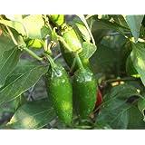 "Jalapeno Pepper Plant - 3.5"" Pot"