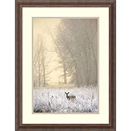 Framed Art Print, \'White-tailed Deer in Fog\' by Jason Savage: Outer Size 21 x 27\