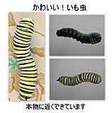 虫 毛虫 イミテーショングッズ いも虫 昆虫