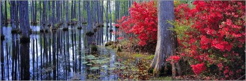 impresion-en-madera-120-x-40-cm-red-azaleas-and-pond-lilies-bloom-in-the-spring-at-cypress-gardens-d