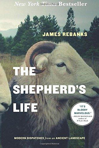 Buy Shepherds Now!