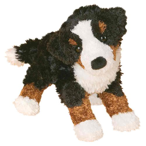 Miranda Bernese Mountain Dog - 1