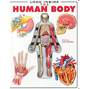 Inside+the+human+body+for+kids