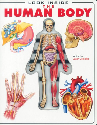 diagrams of human body. pictures human body parts