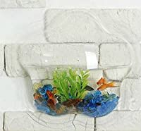 Wall Mounted Acrylic Fish Bowl (FLOWER) by KAZE HOME
