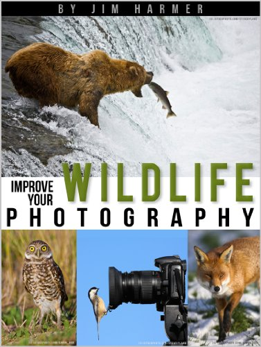 Improve Your Wildlife Photography (Improve Your Photography)